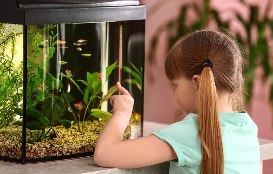 Comment bien éclairer son aquarium ?