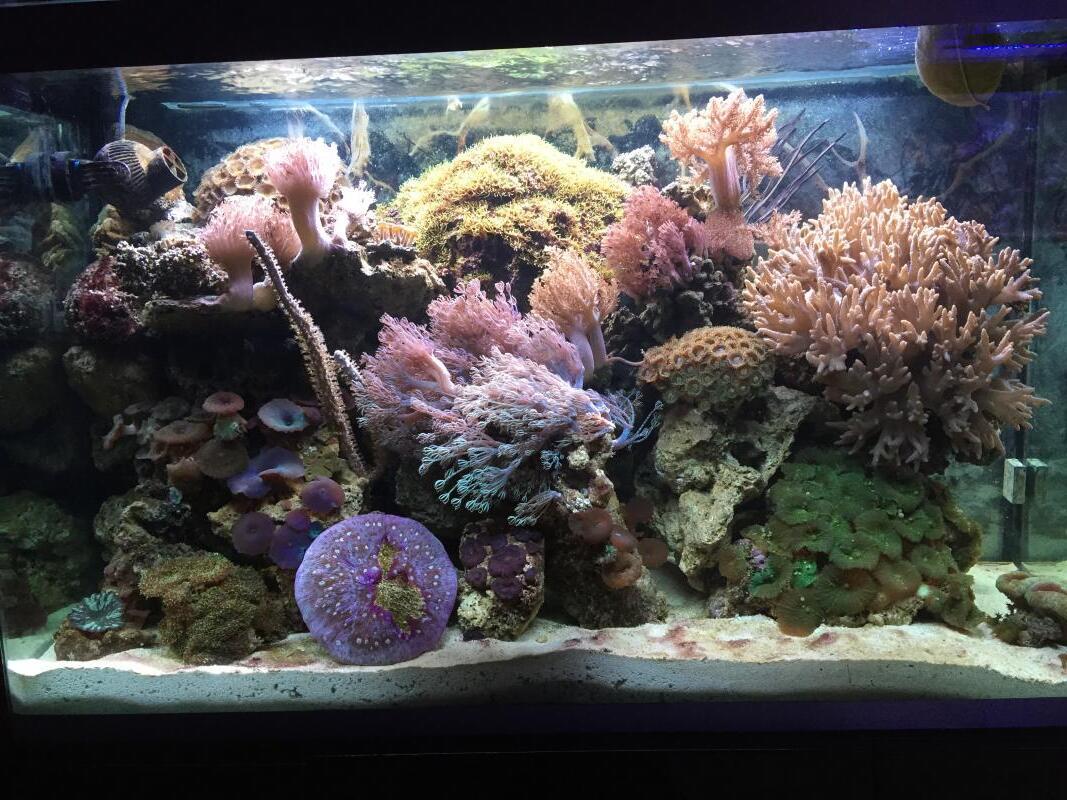 Comment bien éclairer un aquarium ?