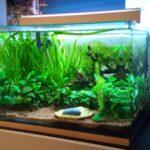 Comment choisir l'éclairage de son aquarium ?