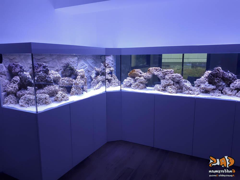 Comment entretenir un aquarium d'eau de mer ?