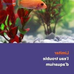 Comment faire pour que l'eau de l'aquarium reste claire ?