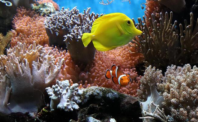 Est-ce que la lumière dérange les poissons ?