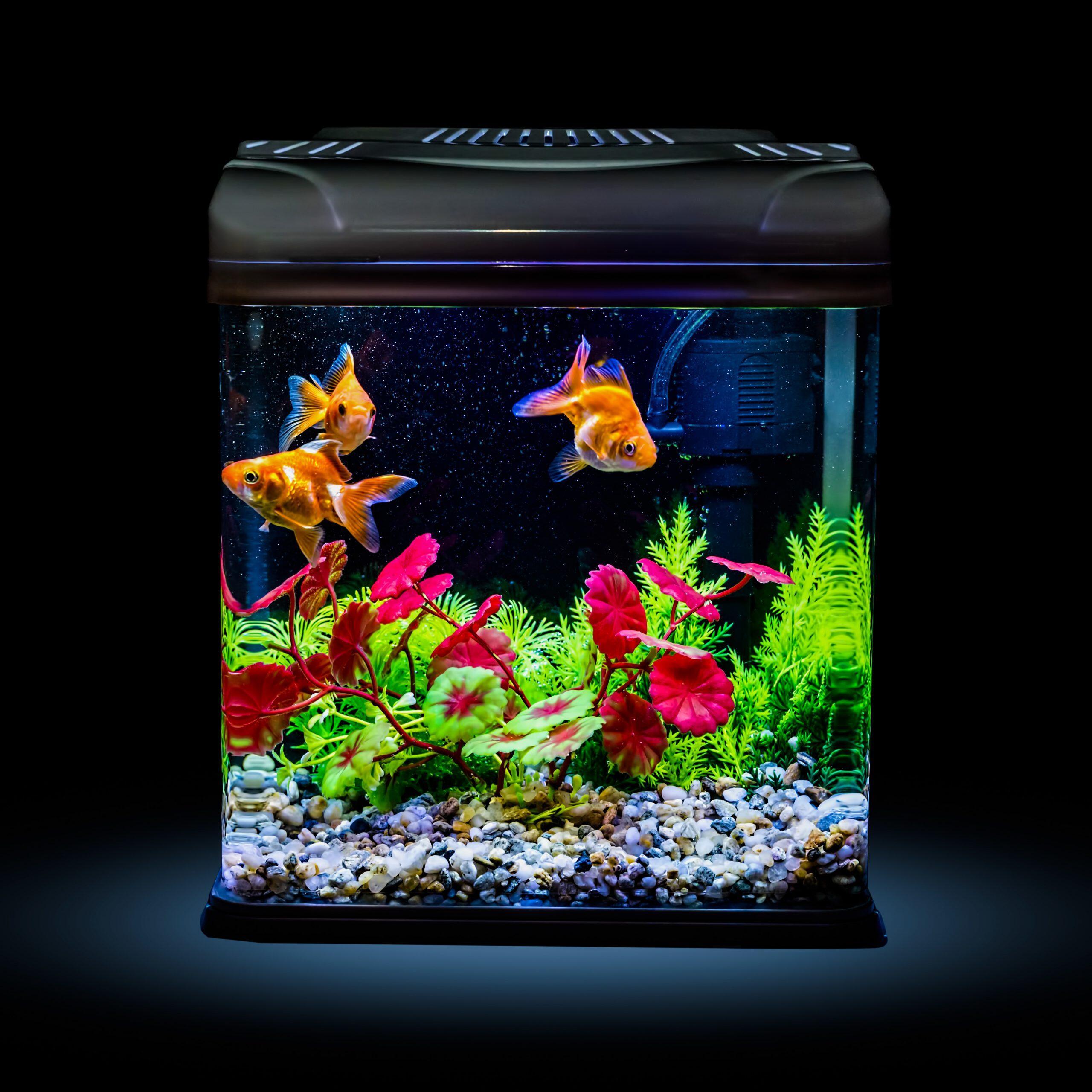 Est-ce que les poissons ont besoin de lumière ?