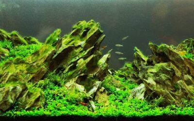 Où placer un aquarium dans une pièce ?