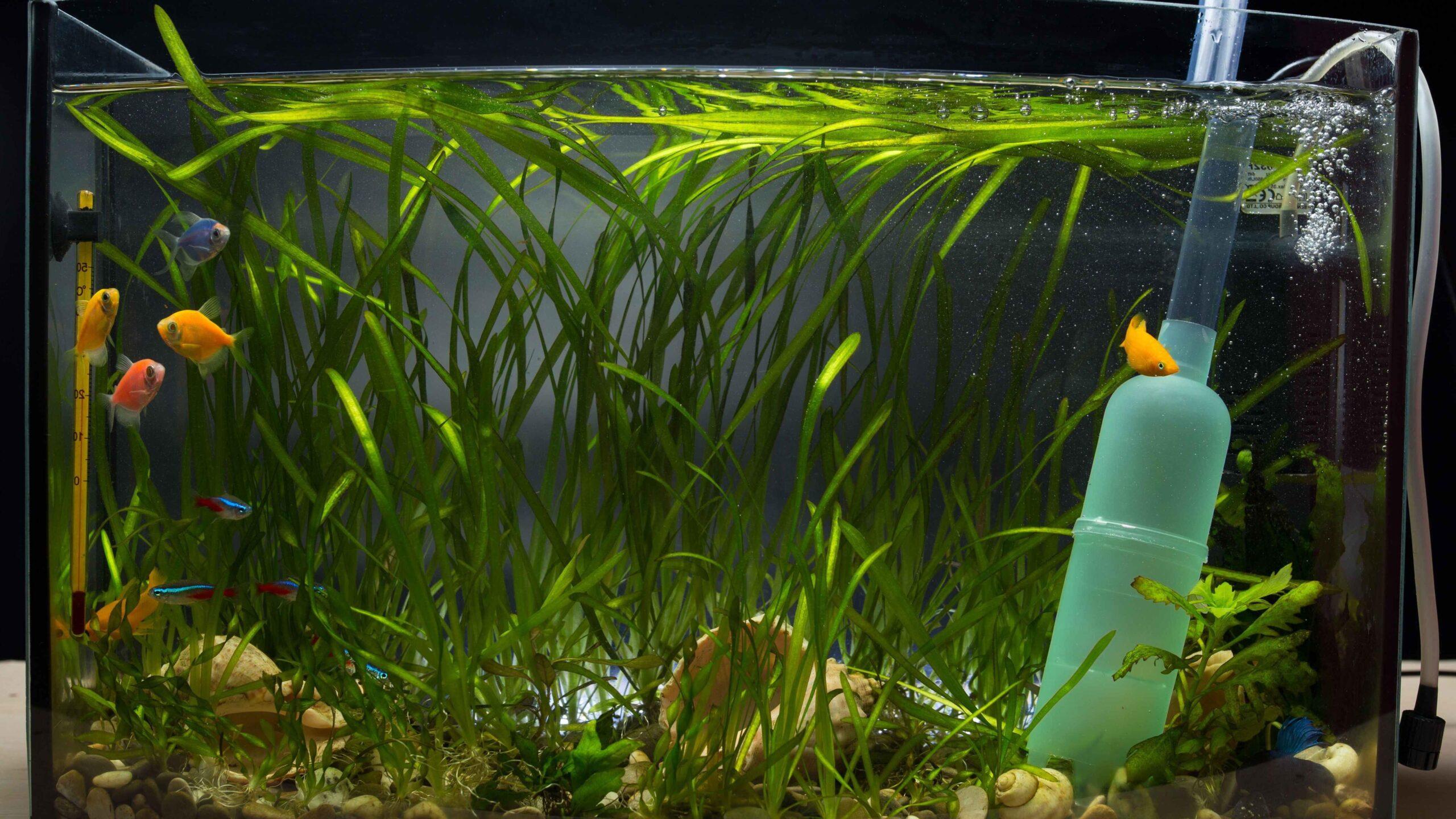 Pourquoi l'eau de l'aquarium est trouble ?