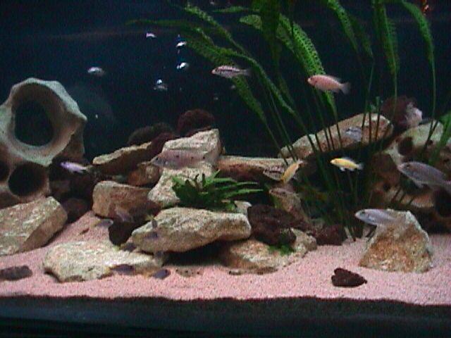 Pourquoi l'eau de mon aquarium est trouble ?