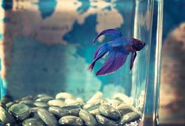 Pourquoi mettre de la lumière dans un aquarium ?