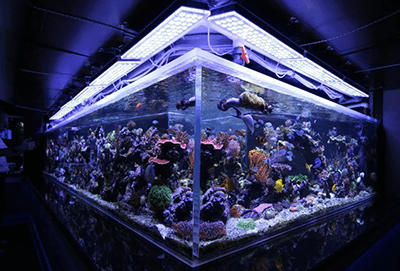 Quand allumer la lumière de l'aquarium ?