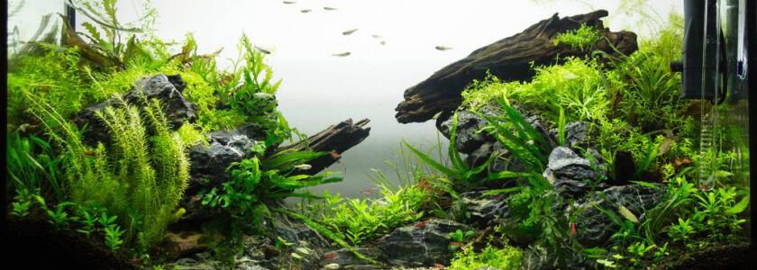 Quand changer Eclairage LED aquarium ?