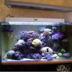 Quand changer lampe Led aquarium ?