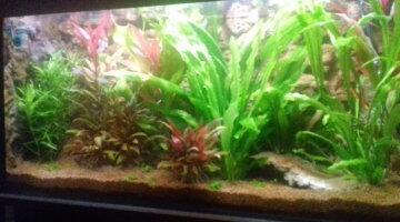 Quand mettre des poissons dans un aquarium neuf ?
