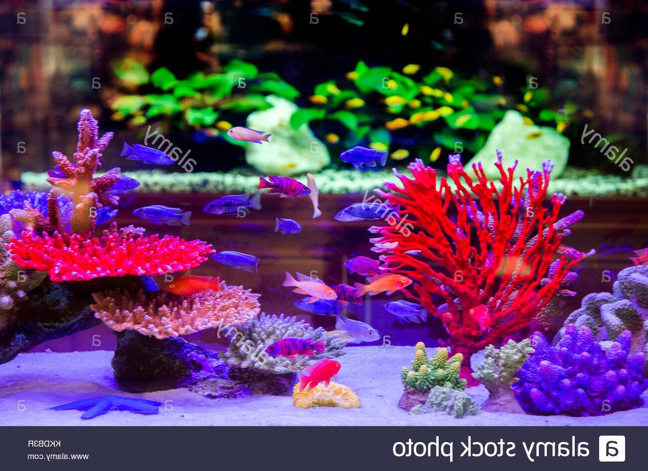 Quand mettre la lumière aquarium ?