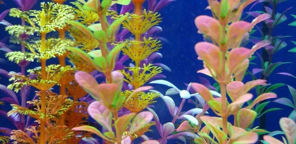 Quel aquarium pour des néons ?