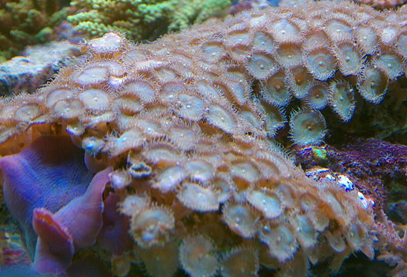 Quel éclairage LED pour aquarium récifal ?