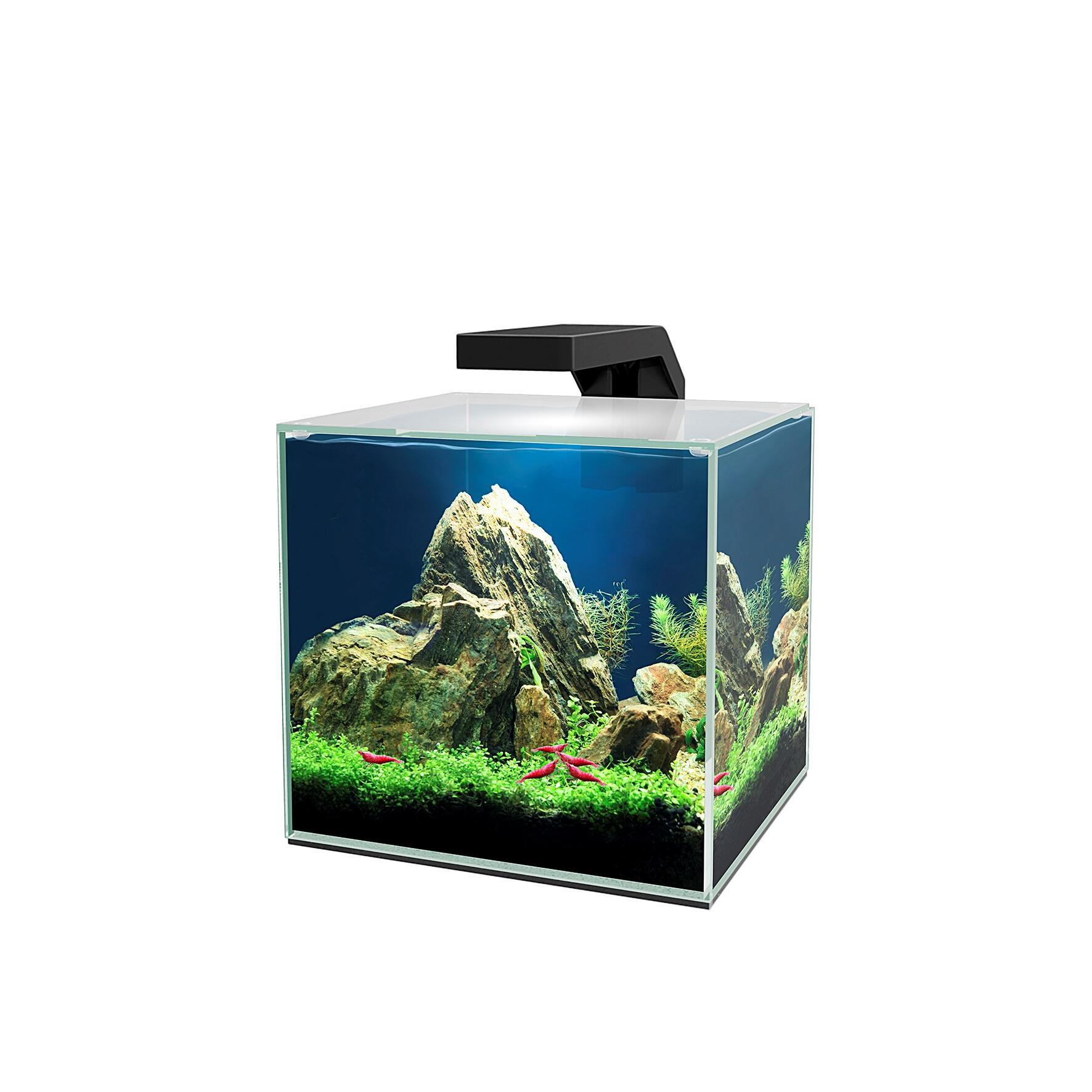 Quel eclairage led pour aquarium plante ?