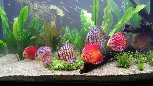 Quel éclairage pour aquarium plante ?