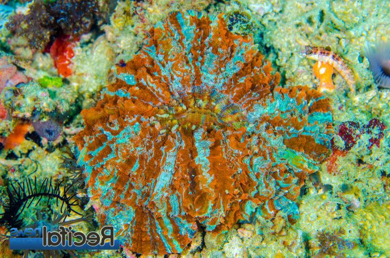 Quel éclairage pour coraux mous ?