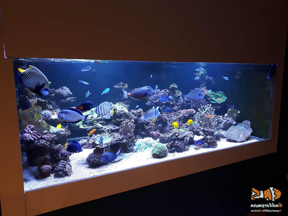 Quel matériel pour un aquarium d'eau de mer ?