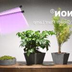 Quel ruban LED pour plante ?