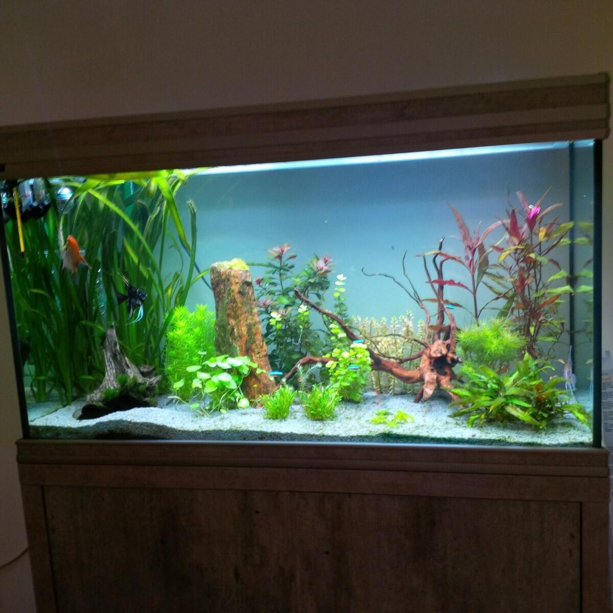 Quel tube fluorescent pour aquarium ?