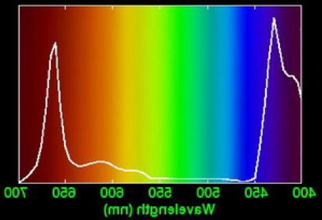 Quelle couleur de LED pour aquarium eau douce ?