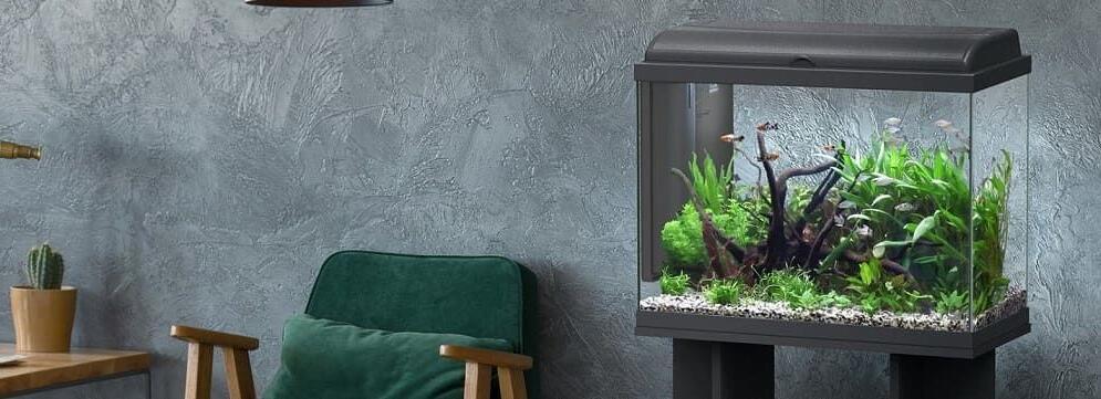 Quelle puissance d'éclairage pour un aquarium ?