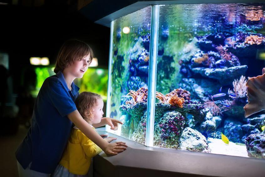 Quelle puissance rampe LED aquarium ?