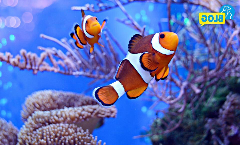 Quelle taille aquarium eau de mer ?