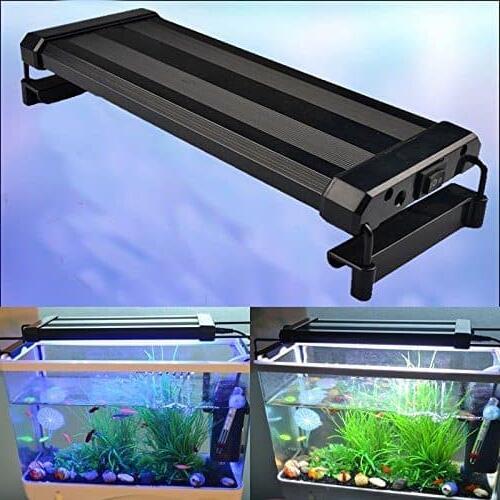Quelle type de lampe pour aquarium Recifal ?