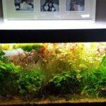 Quels tubes pour aquarium ?