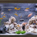 Comment éviter les algues vertes dans un aquarium ?